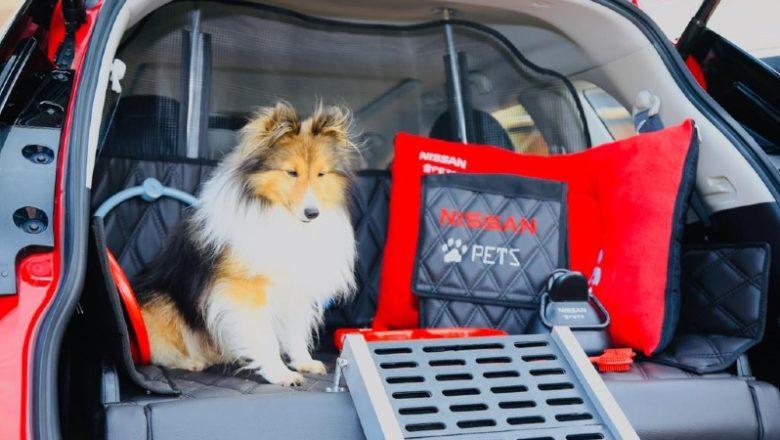 Nissan X-Trail Pets: el vehículo perfecto para sus mascotas
